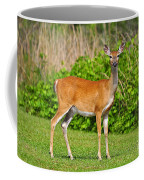 Delightful Doe Coffee Mug