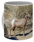 Desert Bighorn Sheep Ewe With Radio Coffee Mug