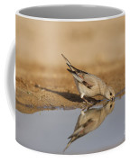 Desert Finch Carduelis Obsoleta Coffee Mug
