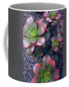 Desert Succulents Coffee Mug