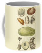 Devonian Fossils, Illustration Coffee Mug