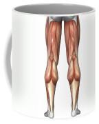 Diagram Illustrating Muscle Groups Coffee Mug