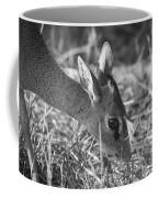 Dik Dik Close-up Coffee Mug