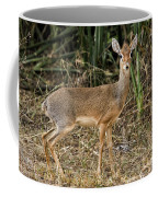 Dik-dik Coffee Mug