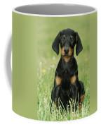 Doberman Pinscher Puppy Coffee Mug