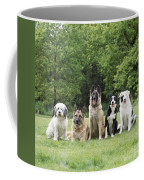 Dogs, Various Breeds In A Line Coffee Mug