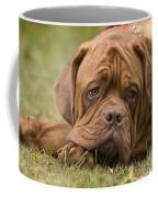 Dogue De Bordeaux Coffee Mug