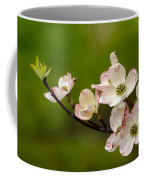 Dogwood Flowers Coffee Mug