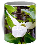 Dogwood In Yosemite Valley-2013 Coffee Mug