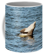 Dolphin Playing Coffee Mug