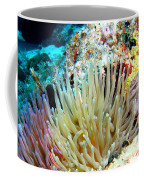 Double Giant Anemone And Arrow Crab Coffee Mug