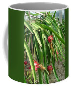 Dragon Fruit Tree Coffee Mug
