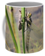 Dragonfly Newly Emerged - First In Series Coffee Mug