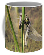 Dragonfly Newly Emerged - Second In Series Coffee Mug