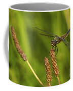 Dragonfly On Seed Pod 2 Coffee Mug