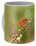 Dragonfly Resting Coffee Mug