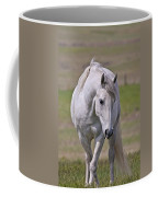 Lipizzane Dreaming Coffee Mug