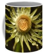 Dried Dandelion After Rain Coffee Mug by Iris Richardson