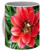 Drops On Gazania Coffee Mug