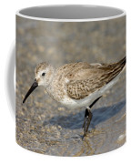 Dunlin Calidris Alpina In Winter Plumage Coffee Mug