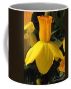 Dwarf Cyclamineus Daffodil Named Jet Fire Coffee Mug