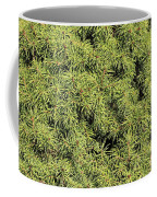 Dwarf Evergreen Coffee Mug