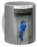Eastern Bluebird At Nest Coffee Mug
