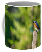 Eastern Bluebird Coffee Mug