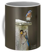 Eastern Bluebird Family Coffee Mug