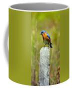 Eastern Bluebird Pose Coffee Mug
