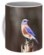Eastern Bluebird - The Old Fence Post Coffee Mug