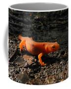 Eastern Newt Red Eft Coffee Mug