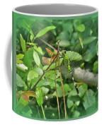 Eastern Pondhawk Female Dragonfly - Erythemis Simplicicollis - On Pine Needles Coffee Mug