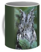 Eastern Screech Owl In Tree Coffee Mug