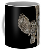 Eastern Screech Owls At Nest Coffee Mug