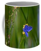 Eastern Tail Blue Butterfly Coffee Mug