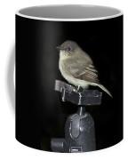Eastern Wood Peewee On Tripod Coffee Mug