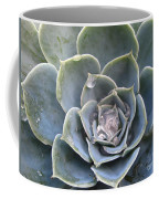 Echeveria With Water Drops Coffee Mug