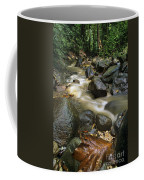 Edmond Forest Reserve On Saint Lucia Coffee Mug