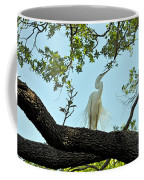 Egret Waiting For Mating  Coffee Mug