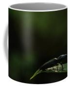 Elateridae Beetle At Sunrise 1 Coffee Mug