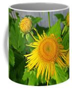Elecampane Daisies Coffee Mug