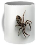 Elegant Jumping Spider Coffee Mug by Christina Rollo