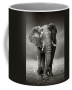 Elephant Approach From The Front Coffee Mug