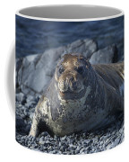 Elephant Seal Pup... Coffee Mug