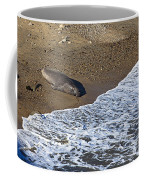 Elephant Seal Sunning On Beach Coffee Mug