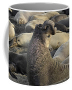 Elephant Seals Coffee Mug