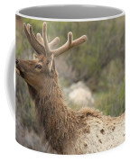 Elk Sky Gaze Coffee Mug