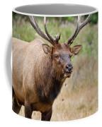Elk Staring Coffee Mug