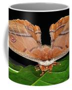 Emperor Gum Moth - 6 Inch Wing Span Coffee Mug